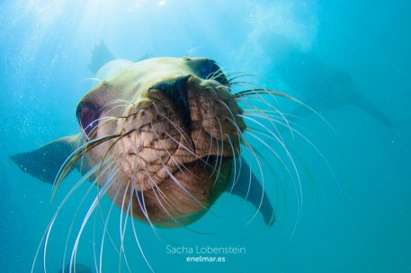 20160531-1224 - Sacha Lobenstein - enelmar.es - Oceanarium Explorer