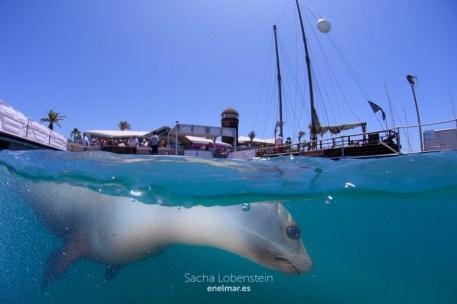 20160531-1235 - Sacha Lobenstein - enelmar.es - Oceanarium Explorer