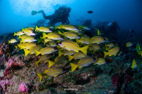20170129-0857 - Sacha Lobenstein - enelmar.es - Moofushi Reef