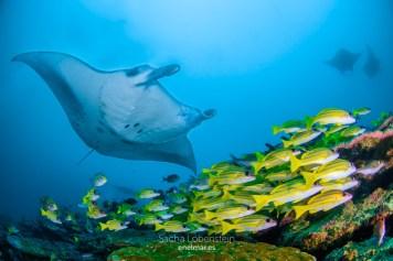 20170129-1226 - Sacha Lobenstein - enelmar.es - Moofushi Reef