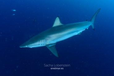 20170206-1435-SachaLobenstein-enelmar.es-Kooddoo Faru