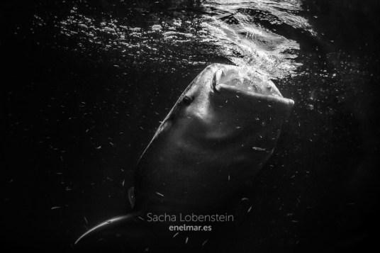 20170207-0005-SachaLobenstein-enelmar.es-Bandhara Faru