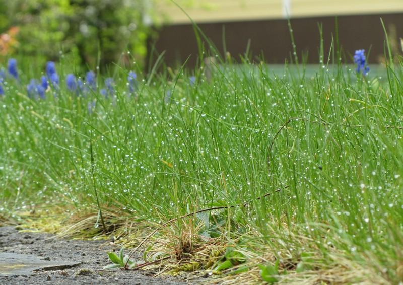 Dagg på gräs