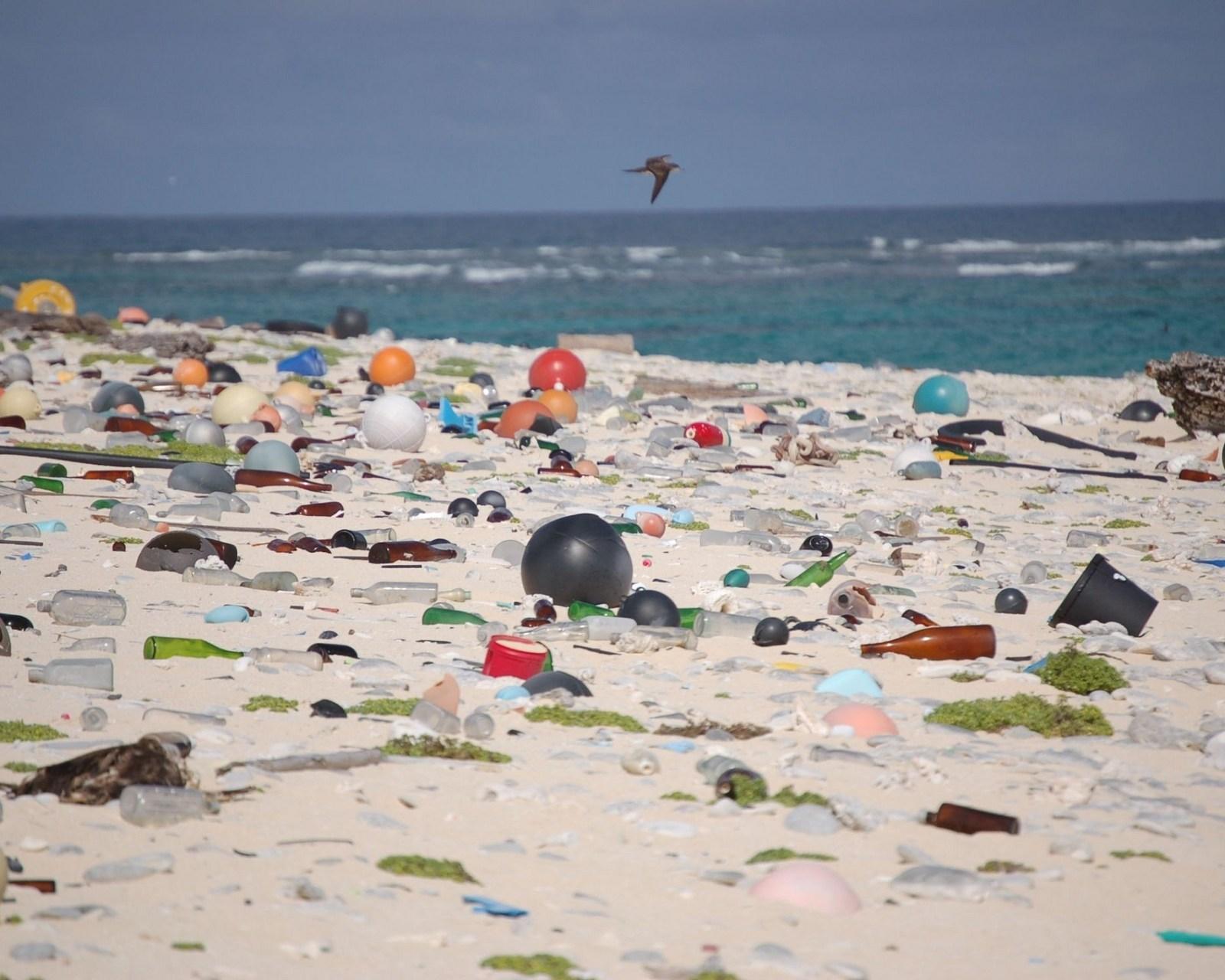 Le plastiche biodegradabili sono ecosostenibili?