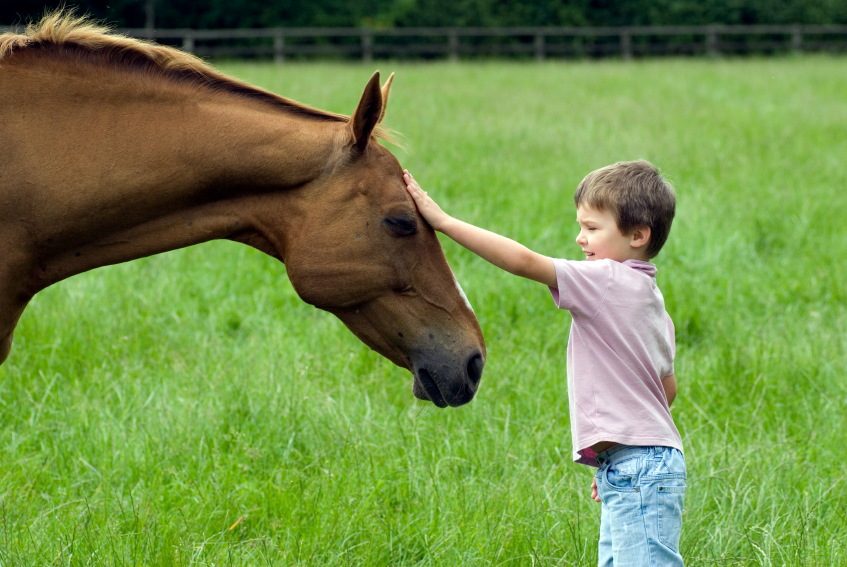 Energetic Communication with Horses