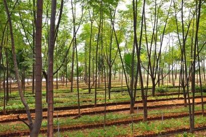 Todas las pistas para saber dónde se encuentra la biomasa más rentable