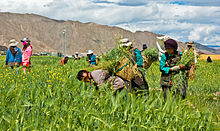 achat terres agricoles landes