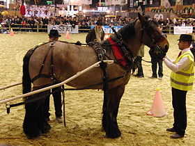 chevaux a vendre ou a donner