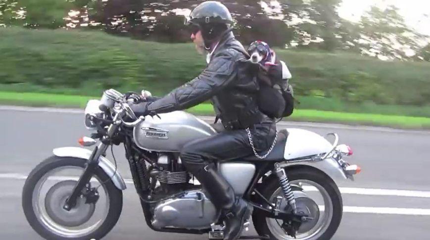 husqvarna rider