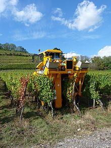 viticole vinicole différence