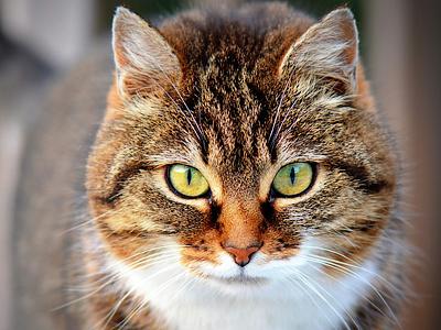 cat 300572 640 - Naše kočka vidí, co my ani nemůžeme