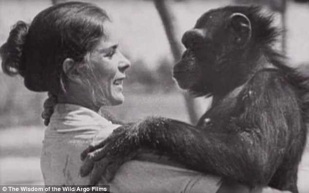 ch07 - Šimpanzi poznali svou pečovatelku po 25 letech