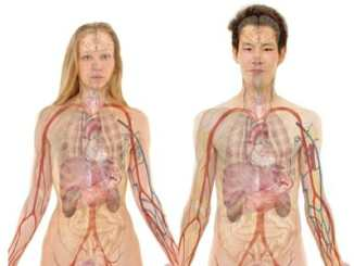 Žaludek - anatomický popis a funkce orgánu.