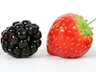 2259528a013b377488c5d85c51ac3469 - Co jíst, abychom měli silnější imunitní systém