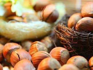 Lískové ořechy a jejich zdravotní výhody.