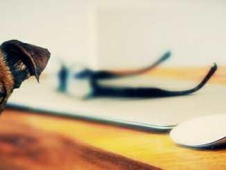 42b992de2790a78a2e5f6e6843f21e0a - Jsou kočky stejně inteligentní jako psi?