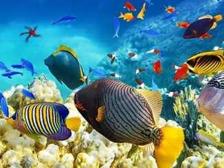 05cb60b24078bfec45a2fa3122560b09 - Bajka na téma Proč se ryba stala rybou