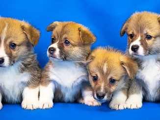 4a3779889e952dd2bdb95649fdc8250f - Proč jsou štěňata sladká? Milujeme jejich dech