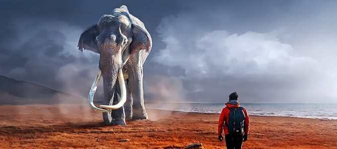 Paměť jako slon není důkazem inteligence.
