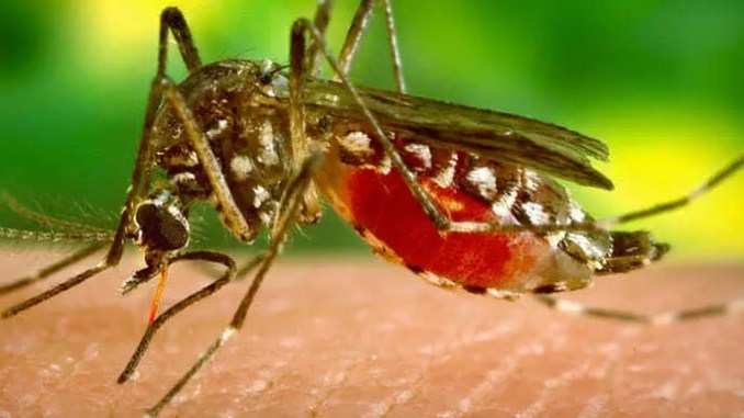 Lze ovlivnit, proč někoho komáři koušou více a jiného méně.