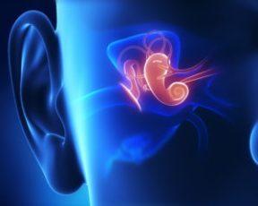 shutterstock 166610225střední ucho 300x240 - Zánět středního ucha může zhoršit sluch