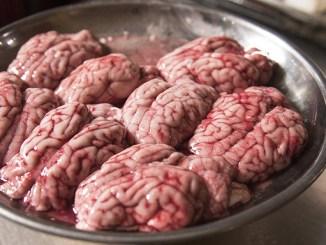 Vědci přivedli mozek zpět k životu čtyři hodiny po smrti.