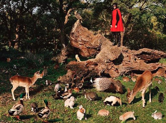 Gucci zneužívá zvířata.