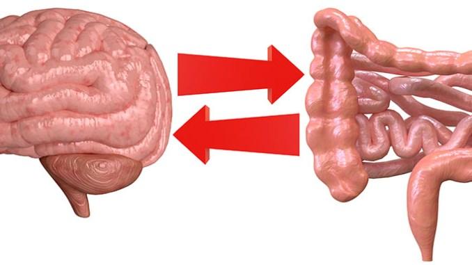 Mozek a myšlení ovlivňují bakterie v našem střevě.