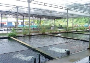 Fish Farming JPEG