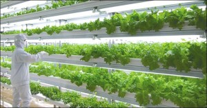 Vertical Farms JPEG