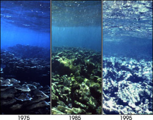 reefs dying over time