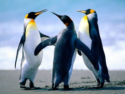 Google Penguin Algorithm 3.0