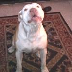 Reiki Practitioner Heals Cape Town Dog