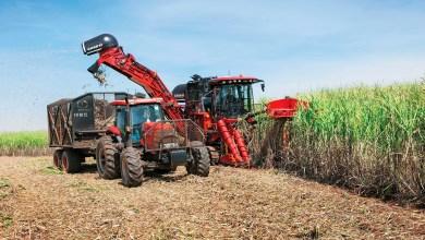 Photo of Más biocombustibles, más alimentos (Análisis)