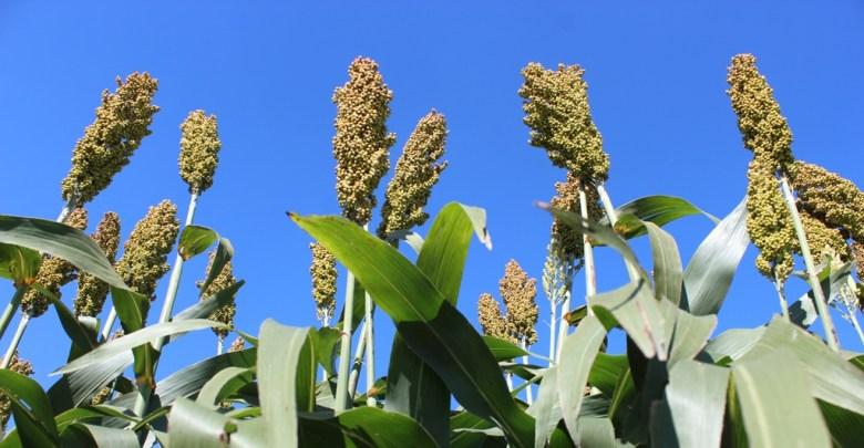 Photo of Industriales priorizan inversión para abastecer etanol a YPFB