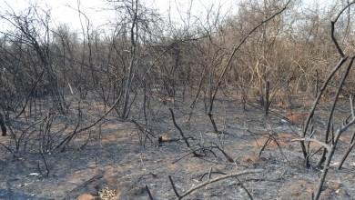 Photo of Expertos hablan de millones de animales perdidos por los incendios