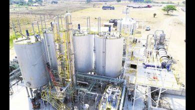Photo of Con derivados de etanol de sorgo se prevé engordar 40.000 bovinos