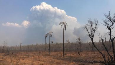 Photo of Incendios dejan más de 10.000 familias afectadas