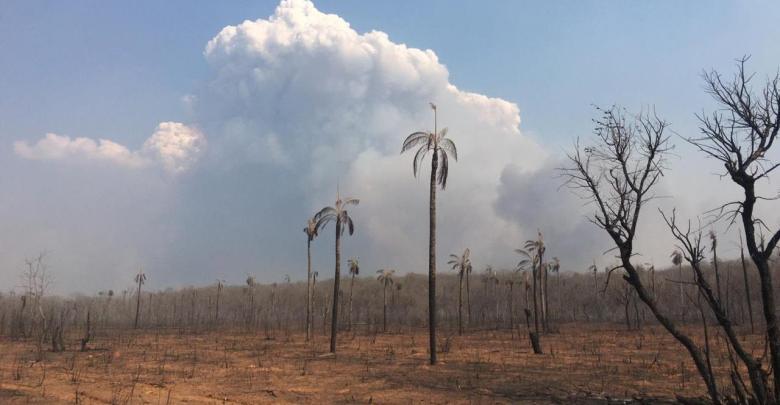 Photo of Bolivia presentará en la COP25 la situación de la Chiquitania, Madidi, Tipnis y Tariquía