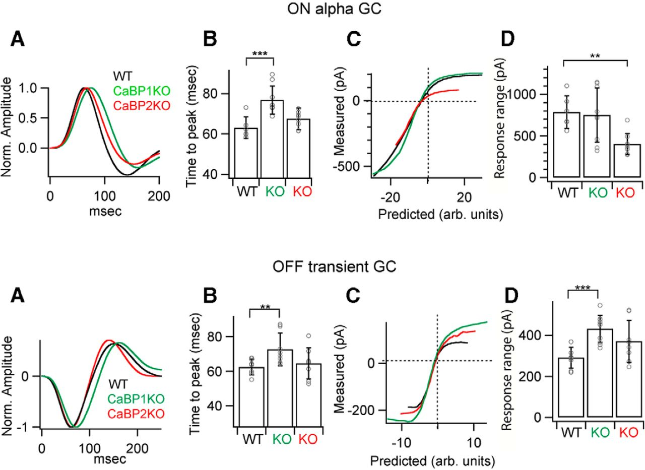 Lack Of Cabp1 Caldendrin Or Cabp2 Leads To Altered