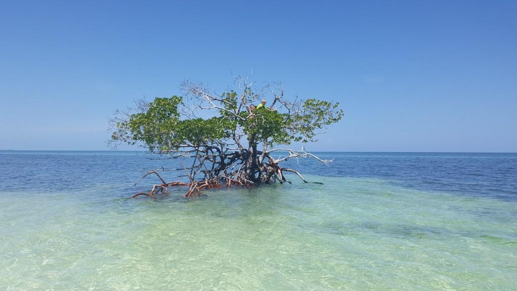 Cayo Levisa Mangrove, Cuba