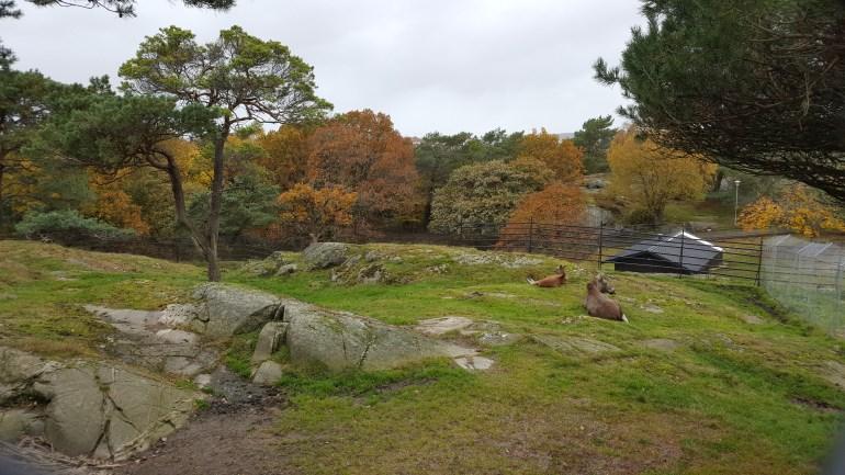 Elge i Slotsskogen i Gøteborg i Sverige