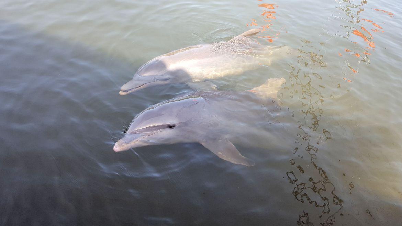 Cuba_Delfiner