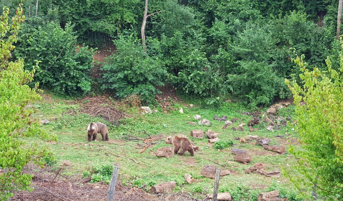 Kuterevo Bear Sanctuary_1
