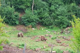 Kuterevo Bear Sanctuary_1