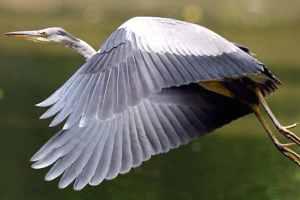 reserve-naturelle-bruges-parc-ornithologique-bordeaux-33
