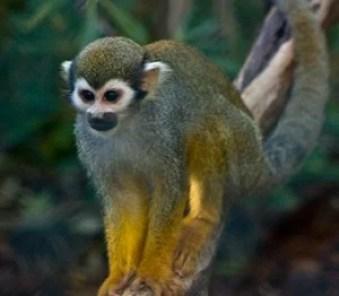 londe-les-maures-zoo-singe