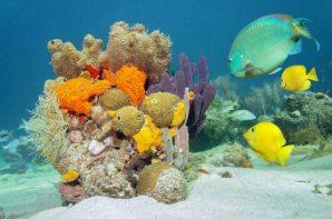 voyage-enfant-antilles-poisson