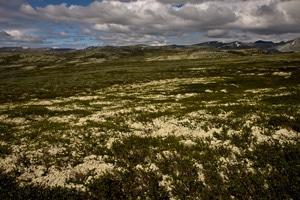 randonnée-norvège-enfant-formokampen