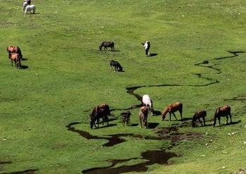 -rando famille enfant topo Chevaux-au-lac-Nino-en-Corse